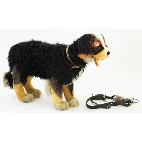 395 - <p>A GERMAN LIFE SIZE SOFT TOY OF A BURMESE MOUNTAIN DOG, WITH A LEATHER HARNESS, 75 X 110CM</p>...