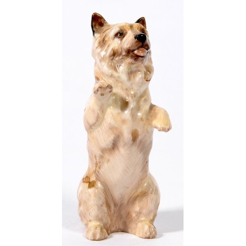 238 - <p>A ROYAL DOULTON BONE CHINA MODEL OF A BEGGING TERRIER, 10CM H, PRINTED MARK, PAINTED HN 2589</p>...