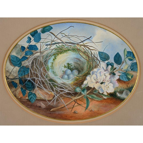 535 - <p>FOLLOWER OF WILLIAM HENRY HUNT - A BIRD'S NEST AND BLOSSOM, WATERCOLOUR, OVAL, 17.5 X 23.5CM </p>...