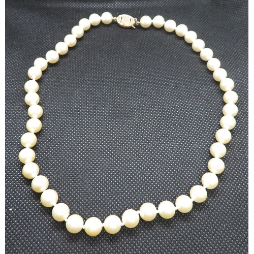 37 - String of full pearls with gold on silver clasp...