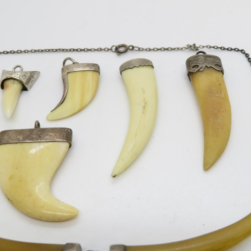 59 - Selection of animal claws, teeth with silver mounts