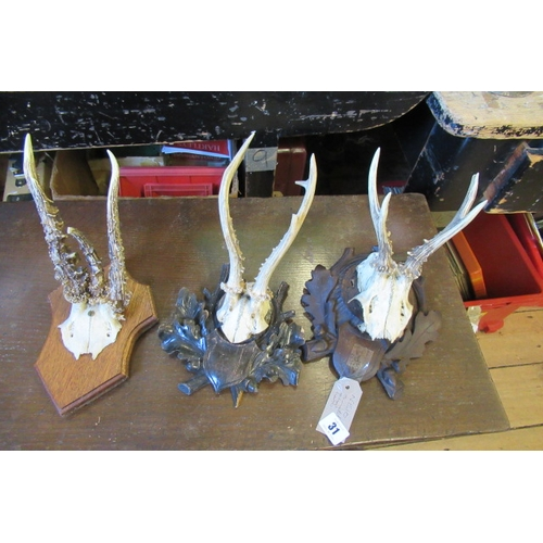 31 - THREE MOUNTED ROE ANTLERS...