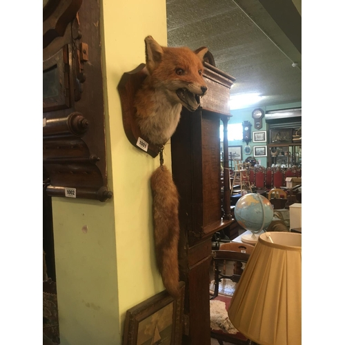 1001 - Taxidermy fox's head mounted on a plaque with a brush...