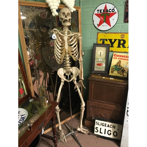 381 - One armed resin skeleton on stand....