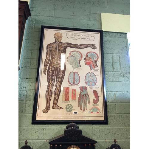 565 - Framed medical chart of Elementary physiology....
