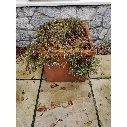36 - Square terracotta planter. { 51cm H X 50cm W }....