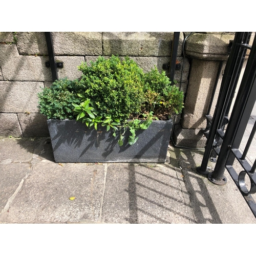 26 - Stone Planter complete with foliage W 95cm H 32cm D 23cm (Not at Venue)...