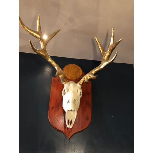 42 - Spectacular mounted antlers with gilded embellishment...