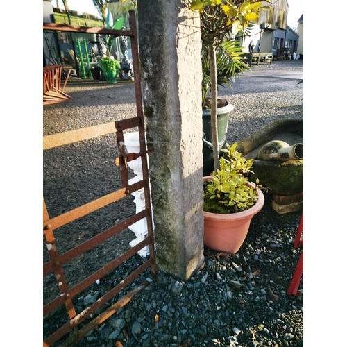 57 - Pair of 19th C. cut limestone gate piers {150 cm H x 23 cm W x 18 cm D}....