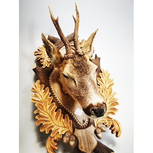 51 - Taxidermy doe mounted on wooden plaque. { 57 cm H c 32 cm W x 32 cm D}.