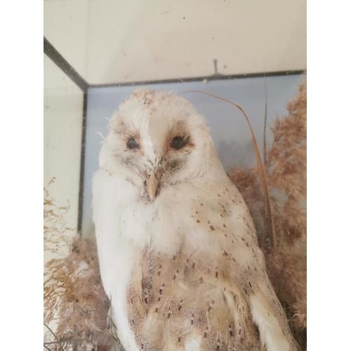 24 - 19th. C. taxidermy Owl mounted in a glazed case. { 44cm H X 31cm W X 16cm D }.