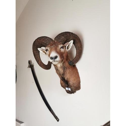 56 - Taxidermy goat's head. { 53cm H X 42cm W approx. }.