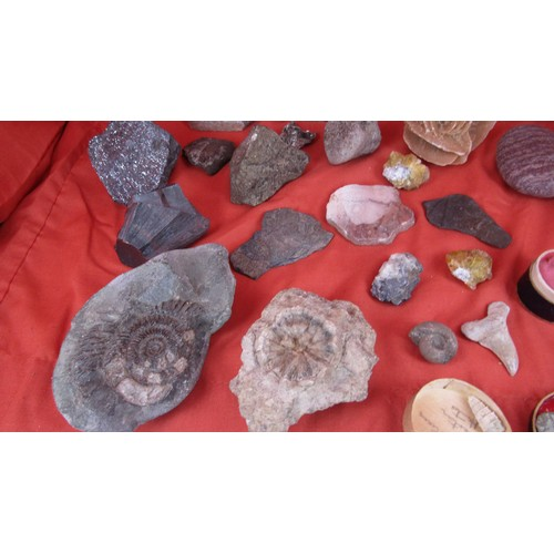 58 - 31 X FOSSILS WITH LETTER COLLECTED IN 1923...