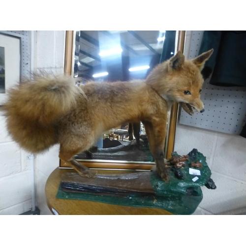201 - TAXIDERMY FOX...