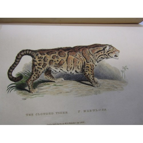 166 - BARON COUVIER,