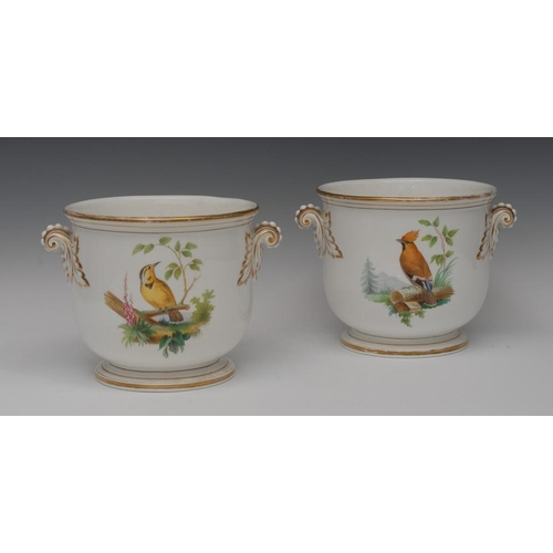 43 - A pair of English porcelain ornithological jardinieres, well painted with song birds perched on bran...