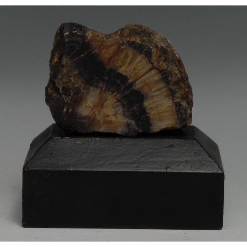 3791 - A Derbyshire Blue John specimen, polished to one face and mounted for display, ebonised wooden plint...