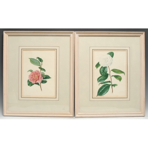 4022 - E**D**Smith (early 19h century) A Pair, Botanical Studies, White and Red Roses signed, 1898, waterco...