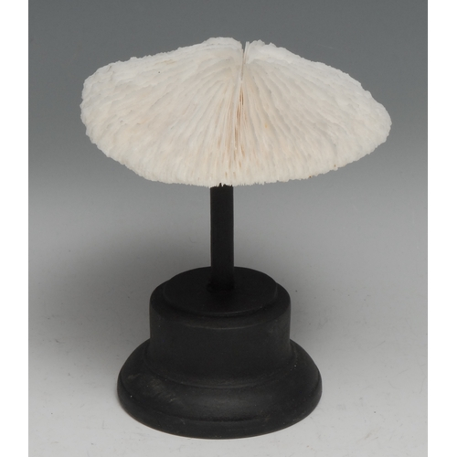 3805 - Natural History - a mushroom coral specimen, mounted for display, 15cm high overall
