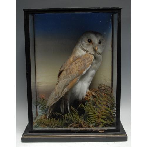 3827 - Taxidermy - a a Victorian barn owl, naturalistically mounted, glazed case, 40.5cm high, 32.5cm wide,...