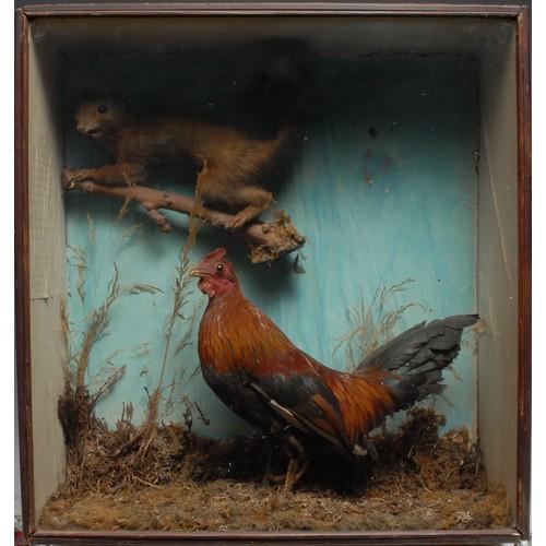 3828 - Taxidermy - a Victorian diorama, comprising a squirrel and a bantam cockerel, naturalistically mount...