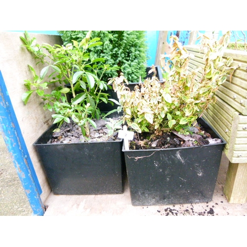 2 - Two Square Plastic Planters and Contents...