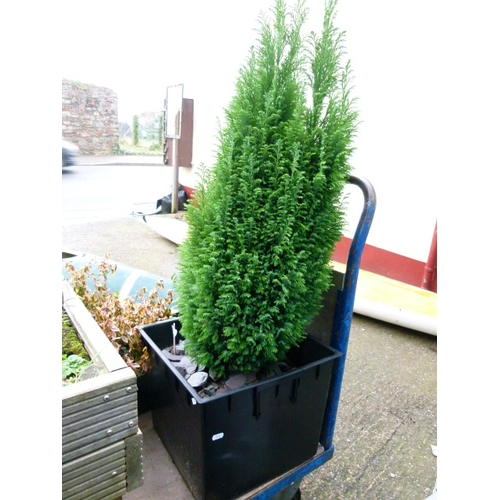 3 - Large Square Plastic Planter with Tree...