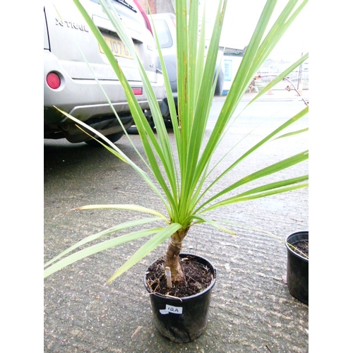 12A - Palm...