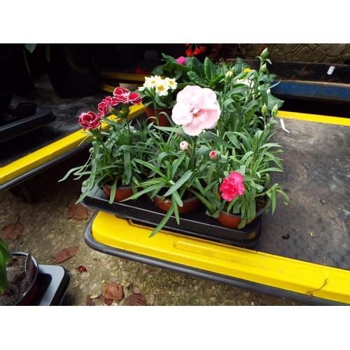 10A - Four Carnation...