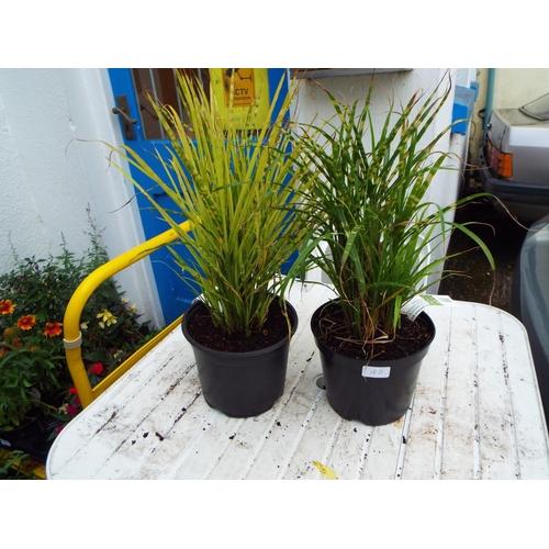 18B - Two Grasses...