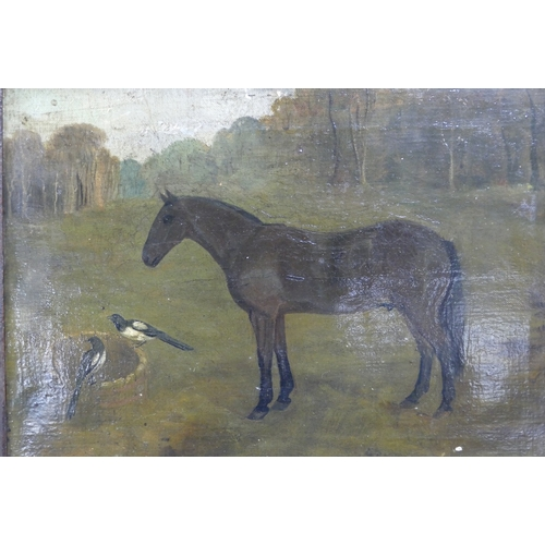 828 - Early Framed print of Lymm Grey shire horse together with a collection of local interest shire horse...