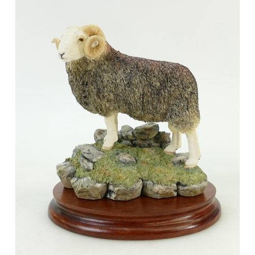 53 - Border Fine Arts Figure 'Herdwick Tup' Bo705: Limited edition figure with box and certificate....
