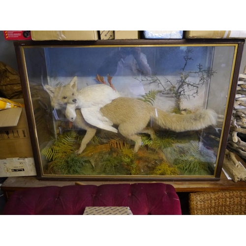 15 - Glass case with taxidermy white fox and duck...