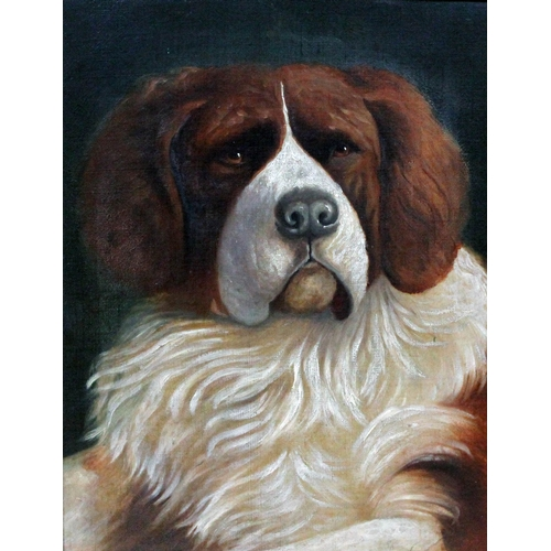 387 - Early 20th century school, dog, portrait of a St Bernhard, oil on canvas, 29cm x 39cm, unsigned, fra...