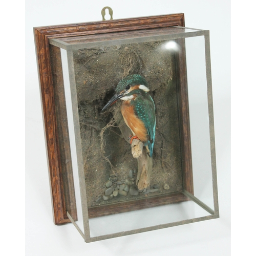 36 - A taxidermy kingfisher, perched on a branch within a naturalistically formed background and housed w...