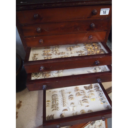 16 - Collector's cabinet complete with drawers of butterflies, moths etc...