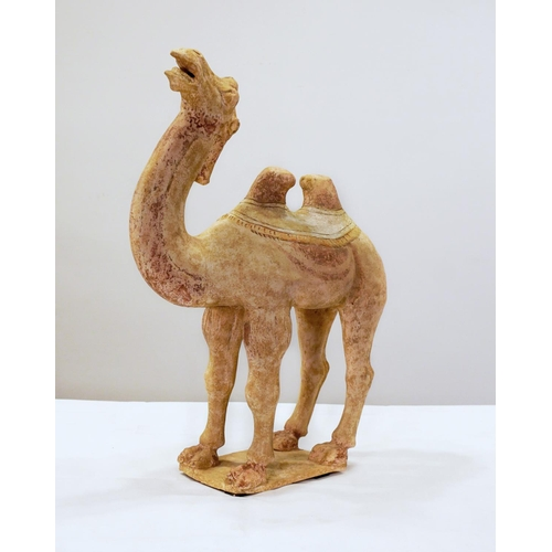 12 - CAMEL - TANG DYNASTY - CHINA - 7th - 10th CENTURY Camel in red terracotta with pigments. China, Shaa...