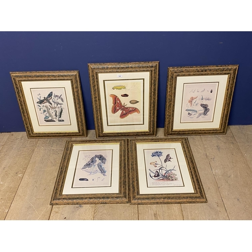 26 - Set of 5 framed and glazed coloured prints depicting butterflies. Condition - faded