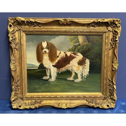 1 - C20th oil on board, study of a King Charles Spaniel, signed and dated John McCorquodale 88, 40 x 51c...