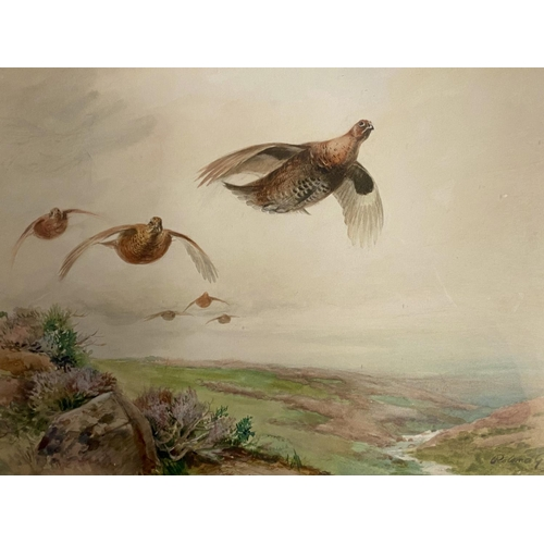 58 - Two watercolours of grouse, one signed Roland Green - 23 x 32cm (condition ok), and signed Annis Gil...