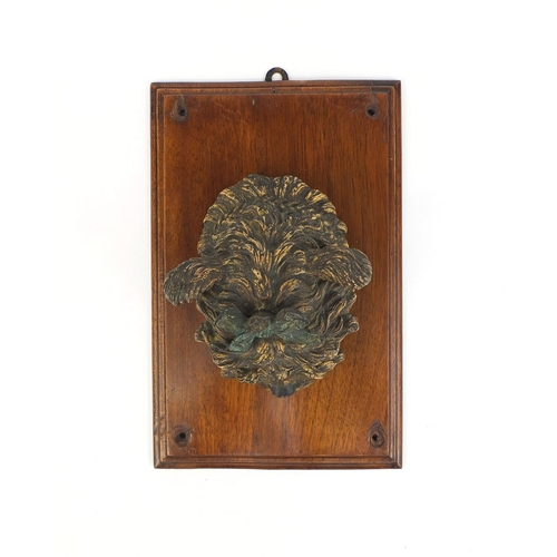 4 - Vienna cold painted bronze Yorkshire Terrier letter clip, wearing a bow, on a mahogany wall plauqe, ...