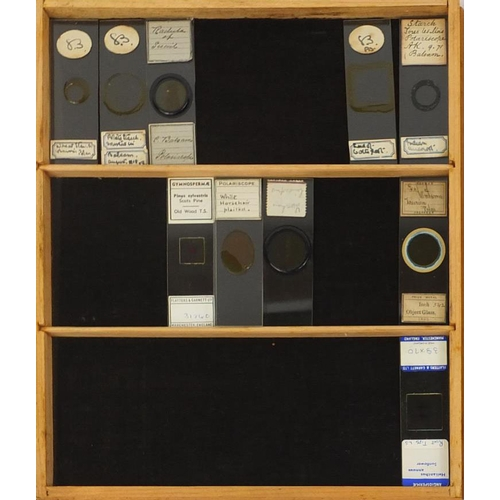 29 - Pine specimen cabinet with twenty one drawers, each housing collection of student glass specimen sli...