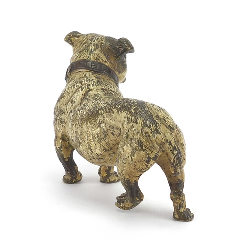 29 - Austrian cold painted bronze Bulldog, stamped Geschutz to the underside, 11.5cm in length...