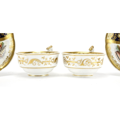 501 - Pair of 19th century cups and saucers, each hand painted with panels of seashells within gilt border...