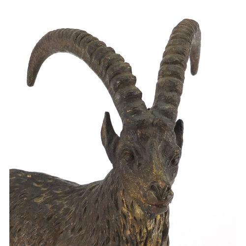 10 - 19th century cold painted bronze mountain goat, 15.5cm high...