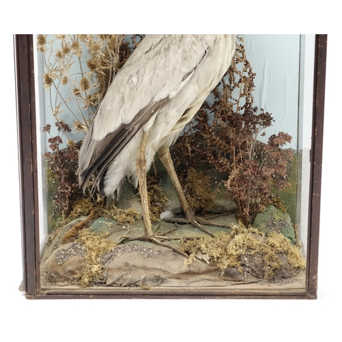 2041 - Victorian taxidermy heron, housed in a glazed display case, 92cm H x 51cm W x 26cm D...