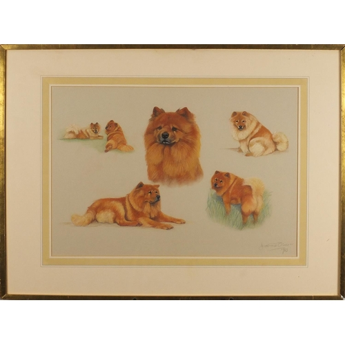 2157 - Davina Owen 1983 - Study of dogs/chows, pastel, mounted and framed, 63.5cm x 44cm...