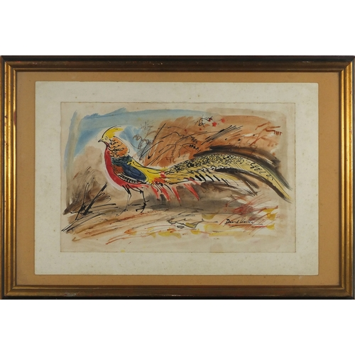 2153 - David Koster - Golden Pheasant, ink and watercolour, label verso, mounted and framed, 45.5cm x 29cm...