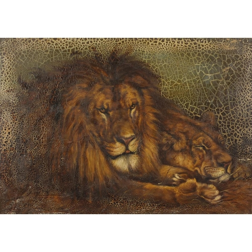 1175 - Lion and Lioness, 19th century oil on canvas, unframed, 71cm x 50.5cm...