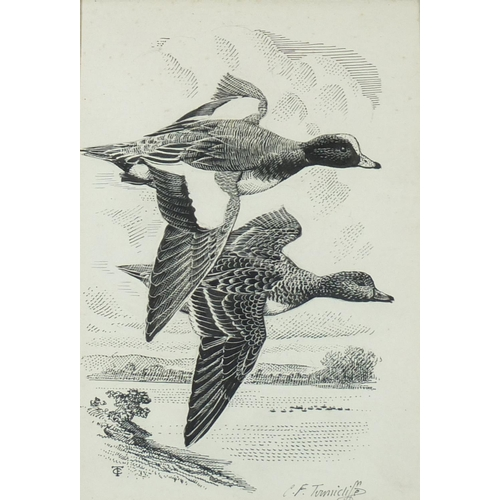 1162 - Charles Frederick Tunnicliffe - Ducks in flight and resting, set of four ink drawings mounted as one...